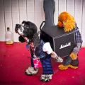 Die besten Bilder in der Kategorie Vote: Dog, Roadie, Costume