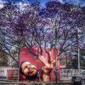 Die besten Bilder in der Kategorie graffiti: Grafitti, Baum