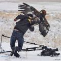 Die besten Bilder in der Kategorie Vote: Bird of prey, attack, claws, eagle