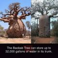 Die besten Bilder in der Kategorie Vote: Monkey tree, baobab, water reservoir, Africa