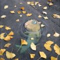 Die besten Bilder in der Kategorie Vote: Street painting, fish, hamster, ground, walkway, art