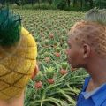 Die besten Bilder in der Kategorie Vote: Pineapple, hairstyle, field, work