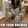 Die besten Bilder in der Kategorie Vote: Owls, Harry Potter, Briefe, Spam