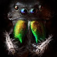 The Best Pics:  Position 1 in  - JumpingSpider